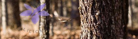 گروه بویایی چوبی مدیترانهای (Woody Chypre)