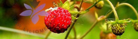 گروه بویایی مدیترانهای میوهای (Chypre Fruity)
