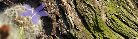 گروه بویایی گروه بویایی چوبی مدیترانهای (Woody Chypre)