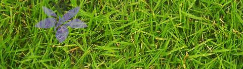 گروه بویایی آروماتیک سبز (Aromatic Green)