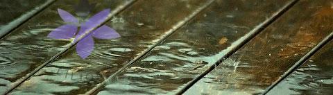 گروه بویایی چوبی آب (Woody Aquatic)