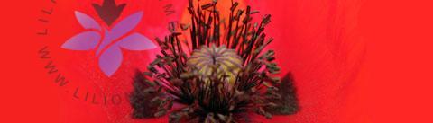 گروه بویایی شرقی گلدار (Oriental Floral)