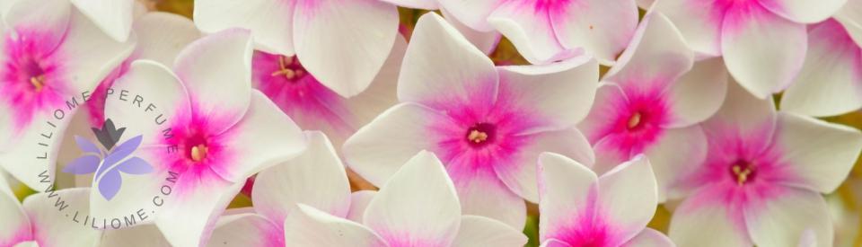 رایحه گلهای سفید عطر و ادکلن - white flowers note