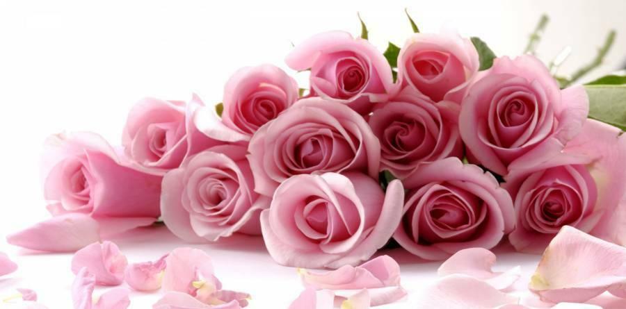 گل محمدی-گل رز-rose